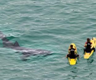 foto: Un grupo de tiburones aterroriza a dos guardavidas surfistas