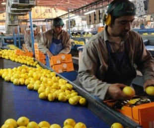 foto: La Argentina empezará a exportar limones a México