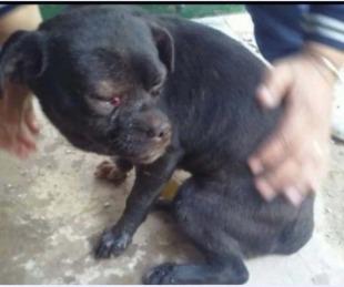 foto: Goya: Tres meses de prisión por matar a un perro