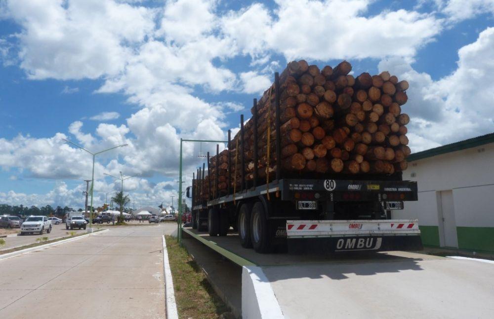 foto: En un contexto difícil, madereros esperan planta de biomasa