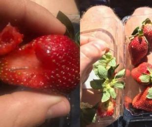 foto: Pánico por la misteriosa aparición de frutillas con agujas escondidas