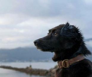 foto: Murió Comando, el perro que despidió al ARA San Juan