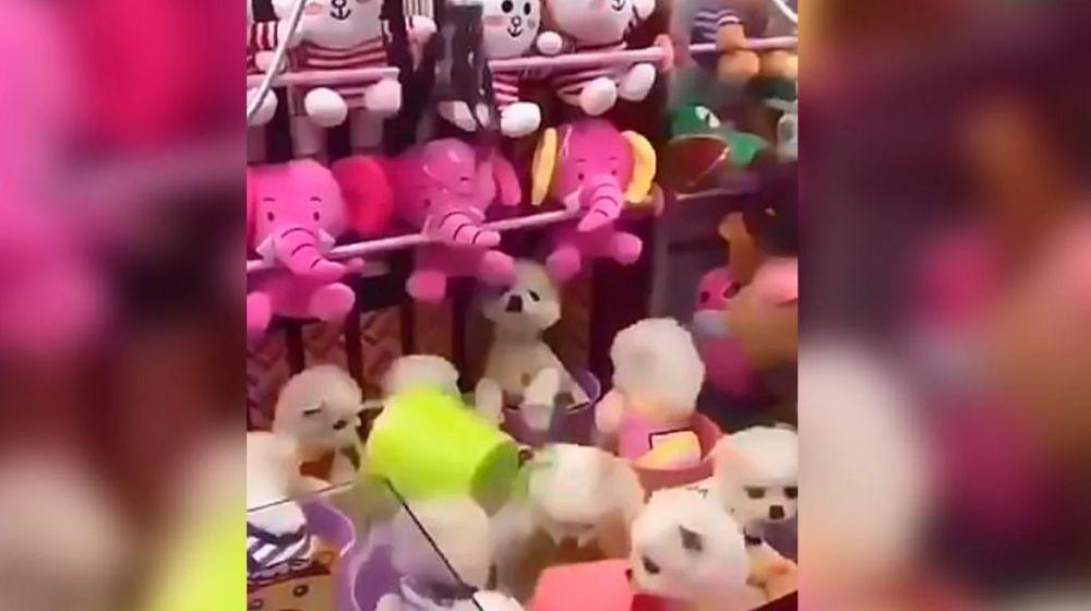 foto: Enojo mundial por una máquina de peluches que ofrece cachorritos reales
