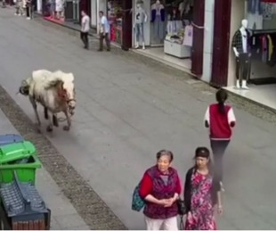 foto: China: un caballo fuera de control atropelló a tres personas