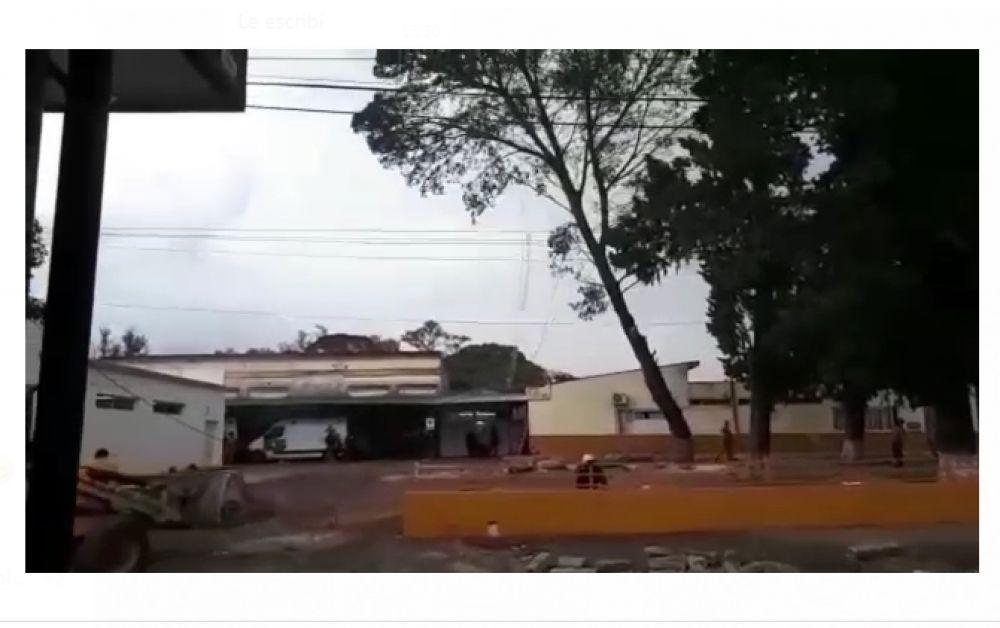 foto: Podaban un árbol y terminaron echando una antena