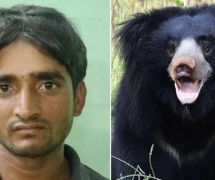 foto: Arrestaron a cazador que mataba osos para comer sus penes