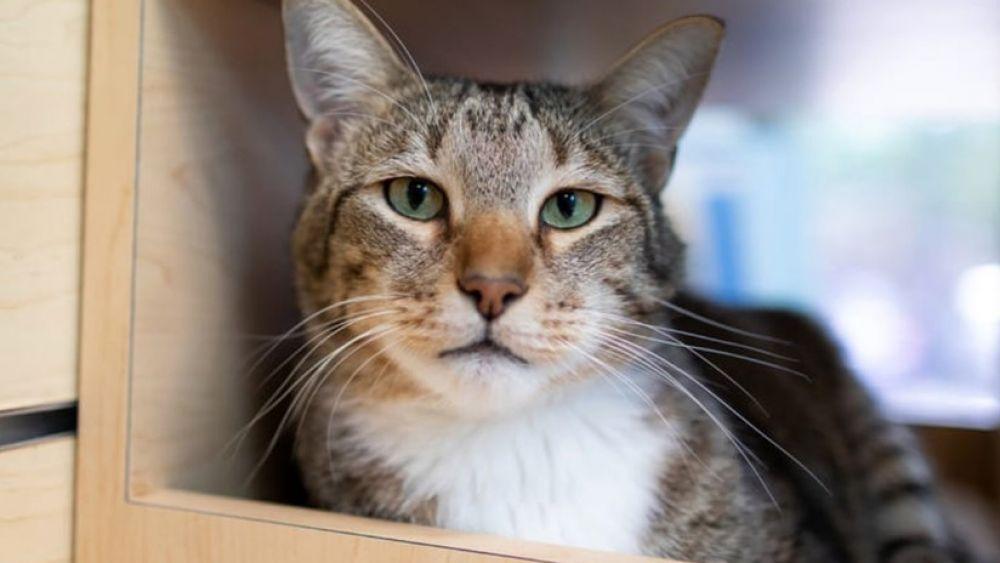 foto: Castigan a un gato por su manía de dejar salir a los demás felinos