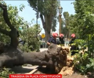 foto: Murió Elsa, la señora aplastada por un árbol en Constitución