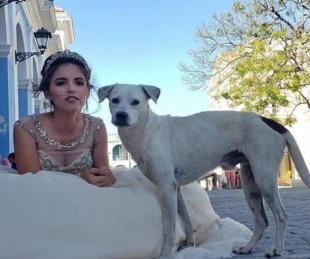 foto: Un perro callejero se coló en las fotos y posó con la cumpleañera