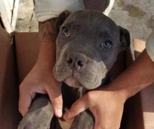 foto: Dejó a su perro en una veterinaria para que su papá no golpee al can