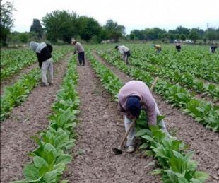 foto: Nación transferirá $170 millones al sector tabacalero