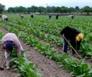 foto: Corrientes: productores tabacaleros recibirán $100 millones