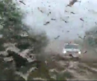 foto: Videos: Alerta en Corrientes por una plaga de langostas