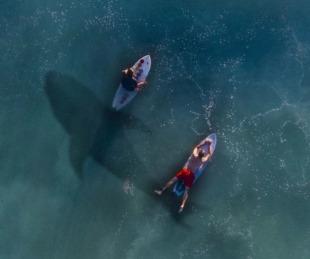 foto: Impactante video en el que un tiburón  acecha a un grupo de surfistas