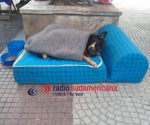 foto: ¡Qué frío!: La postal más tierna del día en plena Peatonal Junin