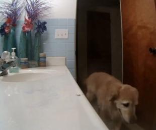 foto: Se encierra en el baño y y prende la ventilación para no escuchar los fuegos artificiales