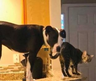 foto: El curioso perro que tiene costumbres de gatos