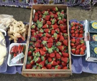 foto: Comprar frutillas es un lujo: se vende a 500 pesos el kilogramo