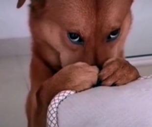foto: Retó a su perro por portarse mal y su tierna reacción conquistó a todo