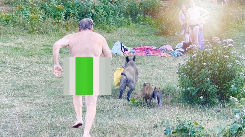 Tomaba sol desnudo y un jabalí le robó la notebook