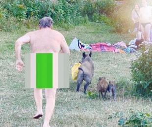 foto: Tomaba sol desnudo y un jabalí le robó la notebook