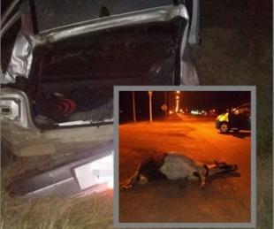 foto: Un automóvil volcó tras chocar con un caballo suelto en Ruta 12