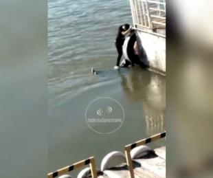 foto: Rescataron a un joven que intentó suicidarse en aguas del Riacho Goya