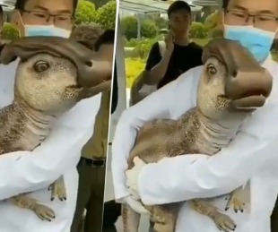 foto: ¿Clonaron un dinosaurio? El video del científico chino que explotó en Internet